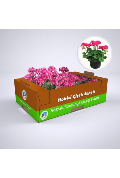 E-tarım Saksılı Sardunya Çiçeği 5 Adet