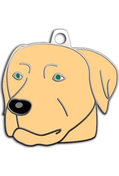 Pet Tag Şampanya Labrador Köpek Künyesi