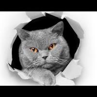 Otografik - Gri Kedi 3D Renkli Oto Stıcker 15X15Cm