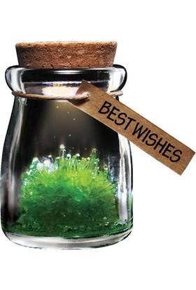 Wishing Crystal Crystal Garden Büyüyen Kristal