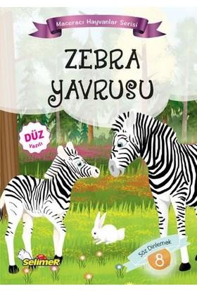 Maceracı Hayvanlar Serisi: Zebra Yavrusu