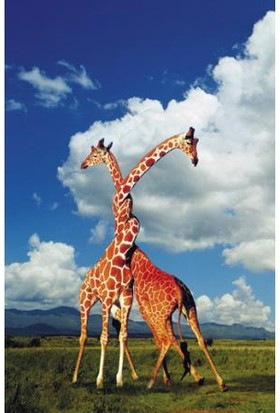 Clementoni Giraffes