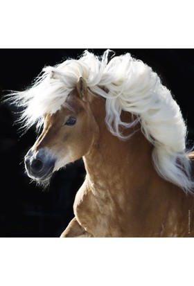 Heye 100 Parça Horse (Mini Puzzle)