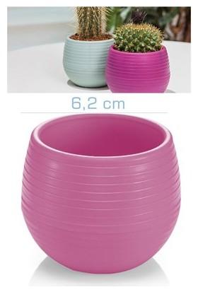 Homecare Kaktüs Saksı Mini Eflatun Renk 091974