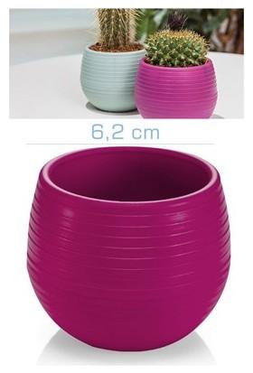 Homecare Kaktüs Saksı Mini Vişne Renk 091973