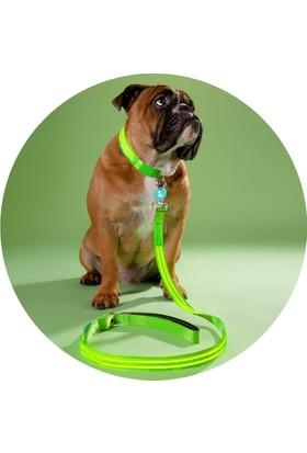 Pratik Gece Gezintisi İçin Fosforlu Köpek Tasması