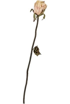 Mc Adam'S Tekli Çiçek