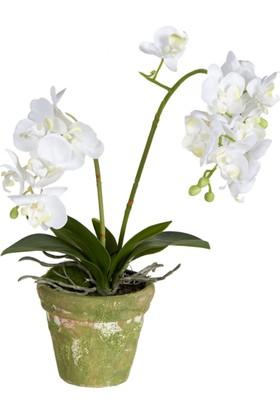 Mc Adam'S Saksılı Çiçek