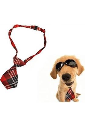 Anka Kravat Şeklinde Köpek Tasması