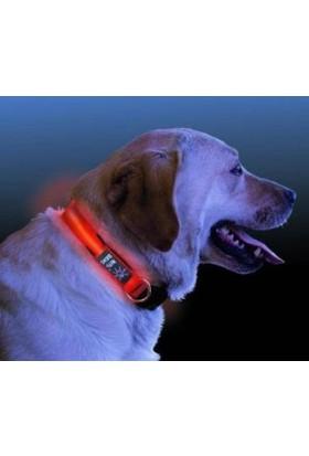 Anka Işıklı Köpek Tasması