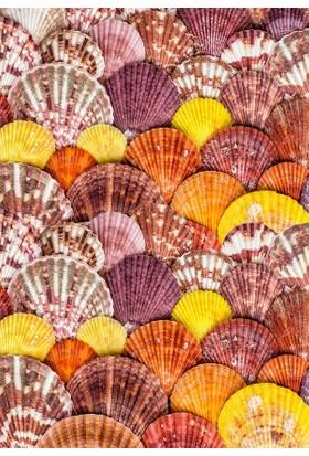 Doğuş Peluş Halı 3D Pano 720B Deniz Kabukları