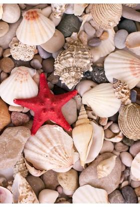 Doğuş Peluş Halı 3D Pano 719B Deniz Kabukları