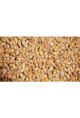 Memişoğlu Baharat Süpürge Tohumu 1 kg
