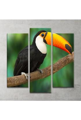 Plustablo Renkli Papağan 3 Parça Kanvas Tablo