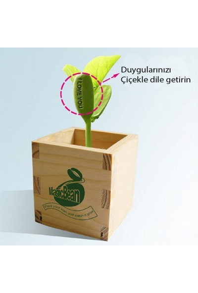 Gzd Sihirli Fasulye - Forgive Me