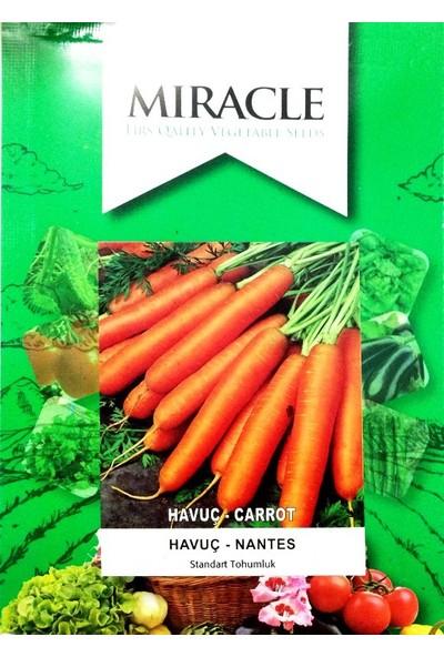 Miracle Tohum Scarlet Nantes Havuç Tohumu (10 gram)