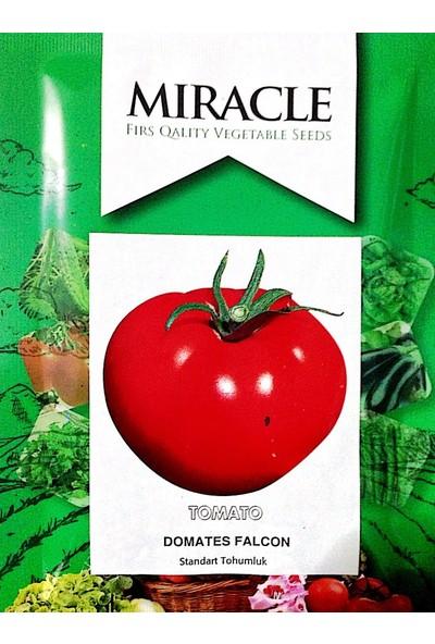 Miracle Tohum Falkon Etli Domates Tohumu (10 gram)