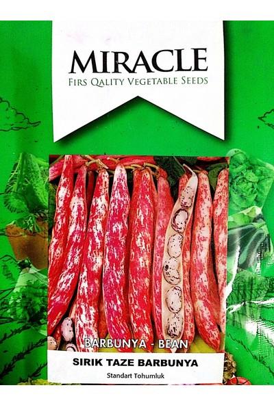 Miracle Tohum Sırık Taze Barbunya Tohumu (50 gram)