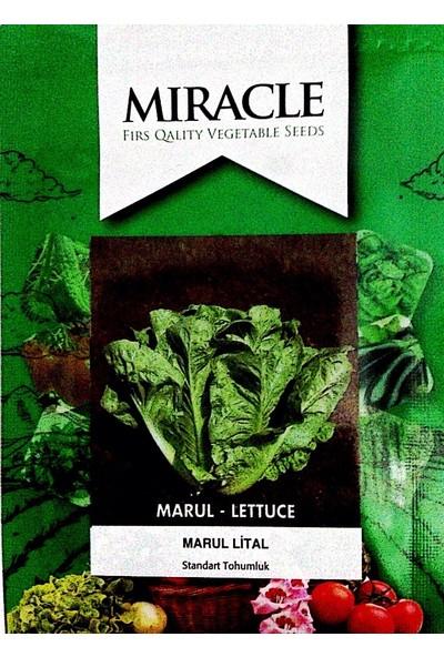 Miracle Tohum Gevrek Lital Marul Tohumu (10 gram)