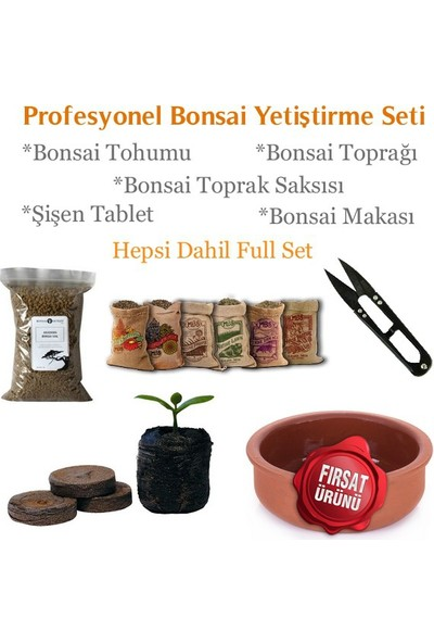 Bonsai Dünyası Begonville Bonsai Profesyonel Yetiştirme Seti - Herşey Dahil Bonsai Ekim Kiti