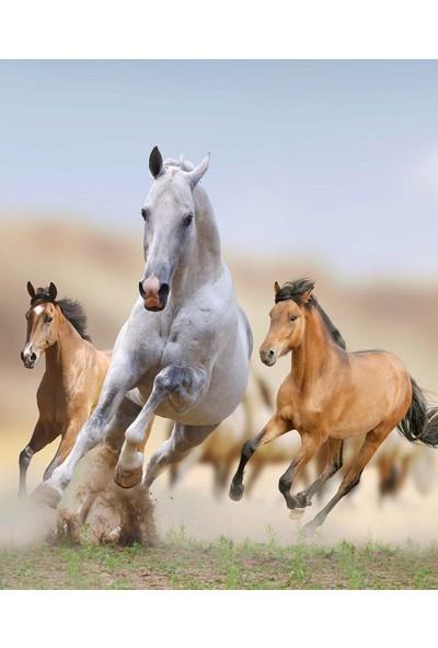 Doğuş Peluş Halı 3D Pano 803 Atlar