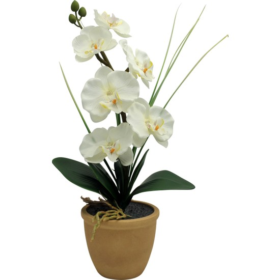 Ledli Orkide Beyaz Kahve Saksı
