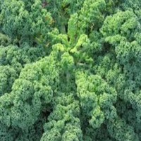 E-fidancim Doğal Siberian Kale Tohumu(50 tohum)