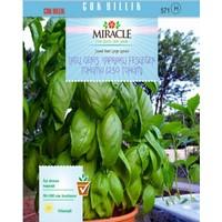 Miracle Tohum Miracle Tatlı Geniş Yapraklı Fesleğen Tohumu (250 tohum)