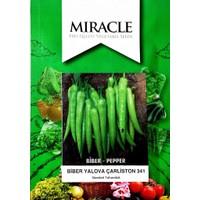 Miracle Tohum Miracle Yalova Çarliston Biber Tohumu (10 gram)