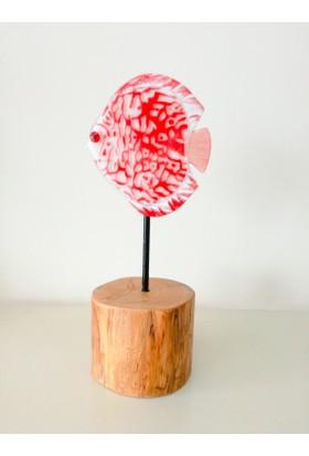 Cam Stüdyo Cam Ve Ağaç Dekor Kırmızı Balık (Discus)