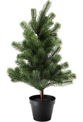 Fıstık Çamı Pinus Pinea 80x120 cm