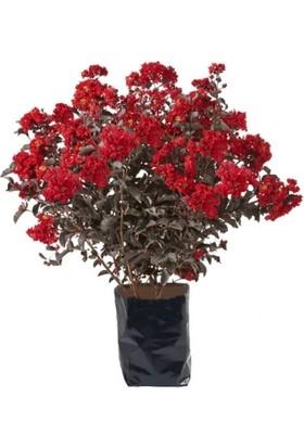 Oya Ağacı 100x150 cm
