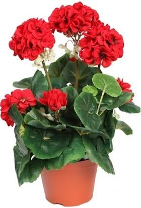 Sardunya Kırmızı 30x50 cm