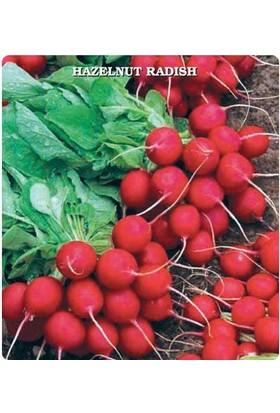 E-fidancim Kırmızı Fındık Turp Tohumu (550 tohum)