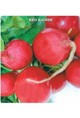 E-fidancim İri Kırmızı Turp Tohumu (550 tohum)