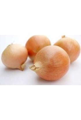 E-fidancim Doğal Sarı Tatlı İspanyol Soğan Tohumu(100 tohum