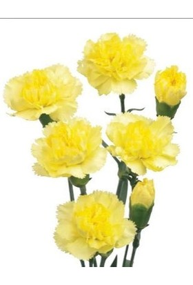 E-fidancim Küçük Sarı Hint Karanfil Çiçeği Tohumu (50 tohum)