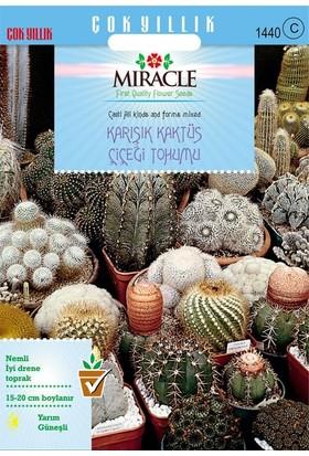 Miracle Tohum Miracle Karışık Kaktüs Bitkileri Çiçeği Tohumu (180 tohum)