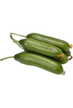 Tazece Silor Hıyar (Silor Salatalık) 1 kg