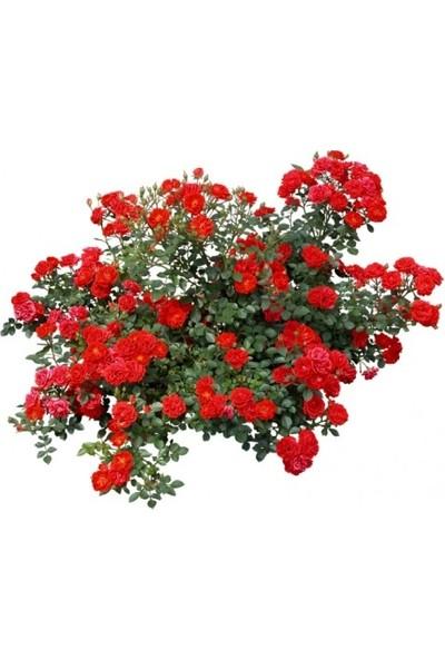Sarmaşık Gül Kokulu - Kırmızı 130x150 cm