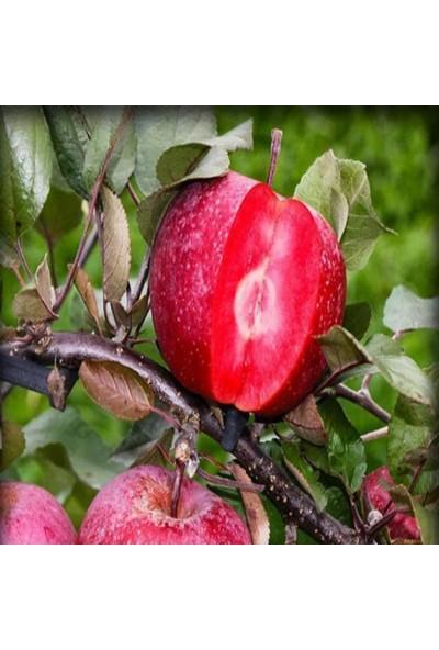 E-fidancim Tüplü İçi Dışı Kırmızı Elma Fidanı