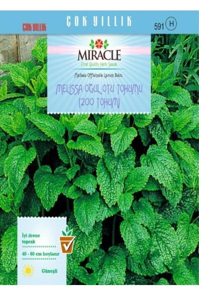 Miracle Tohum Miracle Melissa Oğul Otu Tohumu (200 tohum)