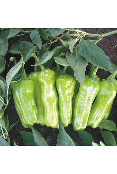 Miracle Tohum Miracle Tatlı Köy Tipi Üç Burun Biber Tohumu (5 gram)