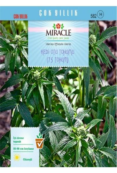Miracle Tohum Miracle Kedi Otu Tohumu (75 tohum)