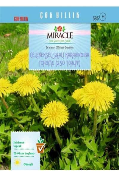 Miracle Tohum Miracle Geleneksel Şifalı Karahindiba Tohumu (250 tohum)