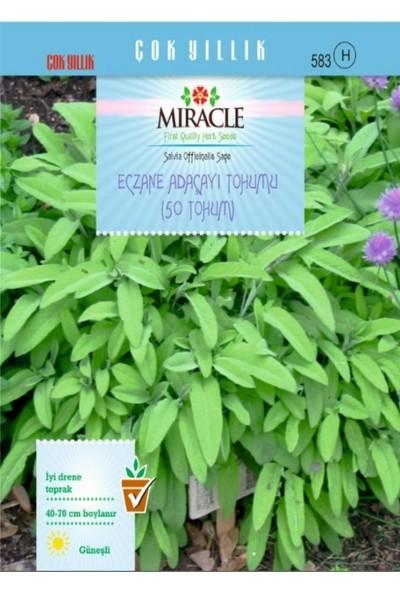 Miracle Tohum Miracle Eczane Adaçayı Tohumu (50 tohum)