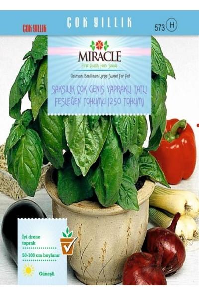 Miracle Tohum Miracle Saksılık Çok Geniş Yapraklı Tatlı Fesleğen Tohumu(250 tohum)