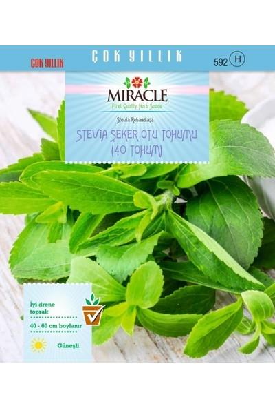 Miracle Tohum Doğal Stevia Şeker Otu Tohumu (40 tohum)