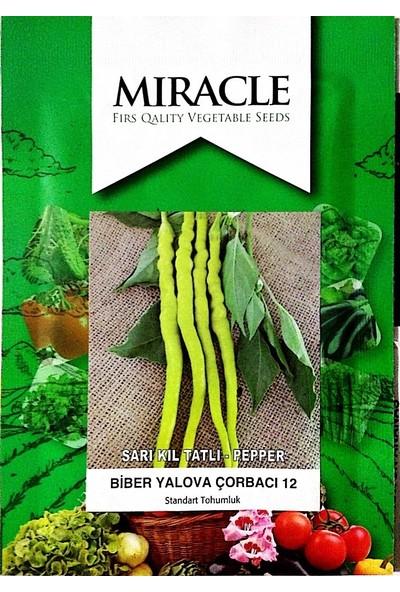 Miracle Tohum Miracle Sarı Tatlı Çorbacı Kıl Biber Tohumu (10 gram)
