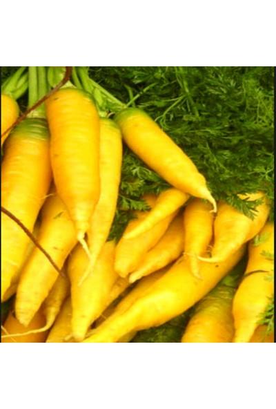 E-fidancim Doğal Solar Yellow Havuç Tohumu(50 tohum)
